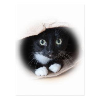 Cat in a bag postcard