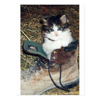 Cat in Boot Postcard