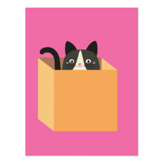 Cat in  box postcard