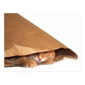 Cat in brown paper sack postcard