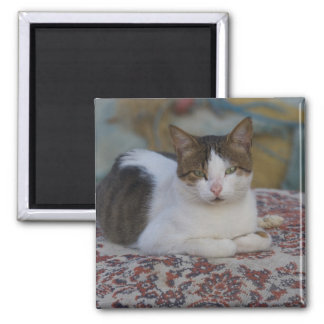 Cat in Marina of Kusadasi along the Aegean Sea, Square Magnet