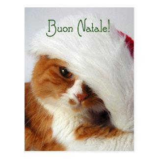 Cat in Santa Hat - Italian Postcard