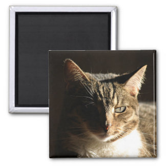 cat in shadows magnet