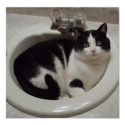 Cat in sink poster