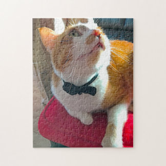 Cat in sunlight on red cushion jigsaw puzzle