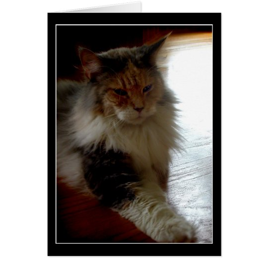 Cat in sunny window photo greeting card