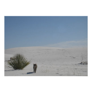 Cat in the Desert Poster