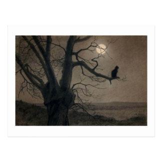 Catin theMoonlight, , Alexandre Steinlen Postcard