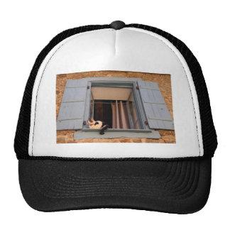Cat in the window trucker hat