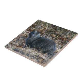 Cat in the Woods Tile