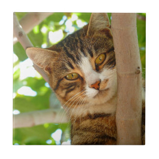 Cat in Tree Tile