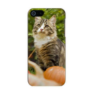 Cat Incipio Feather® Shine iPhone 5 Case