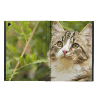 Cat iPad Air Cases