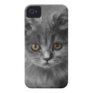 Cat iPhone 4 Case-Mate Case