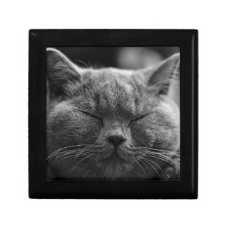 cat jewelry box