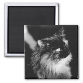 Cat King of the Shelter - Original Black and White Magnet