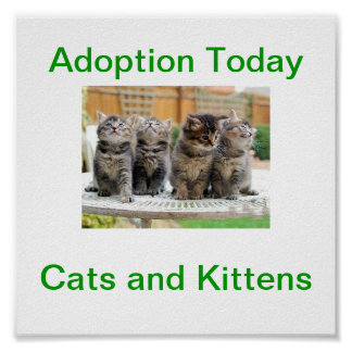 Cat & Kitten Adoption Today Sign