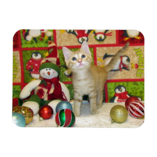 Cat, Kitten, Christmas, Rescue, Photo Magnet