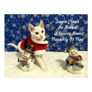 Cat, Kitten, Christmas, Rescue Postcard