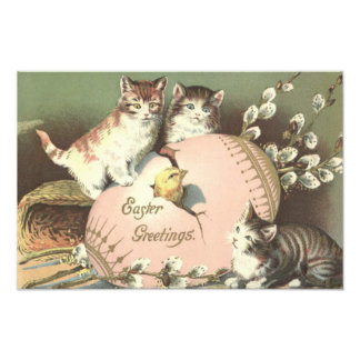 Cat Kitten Easter Colored Painted Egg Chick Photo