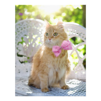 Cat Kitty Feline Summer Sunshine Pet Animal Cute Letterhead