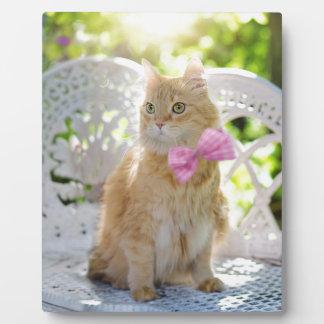 Cat Kitty Feline Summer Sunshine Pet Animal Cute Plaque