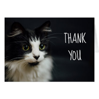 Cat, Kitty, Thank You Small Notecard