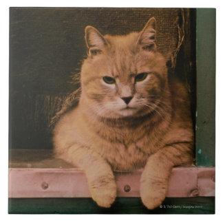 Cat Leans on Windowsill Tile