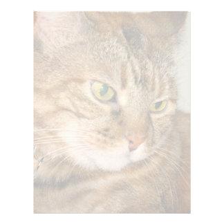Cat Letterhead