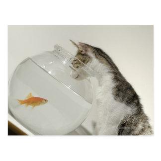 Cat looking at fish in fishbowl postcard