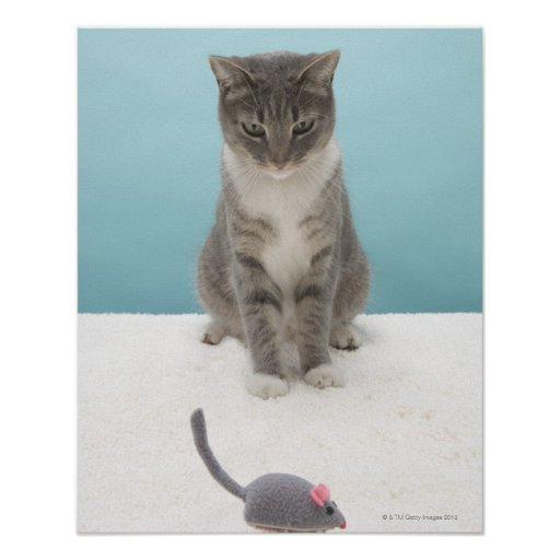 Cat looking at toy mouse on rug posters