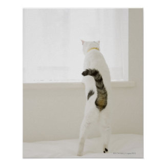 Cat looking out window, rear view poster