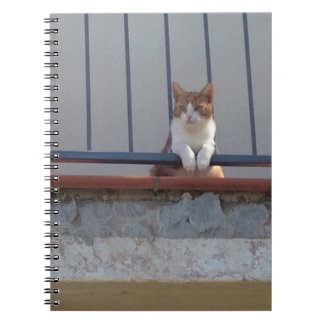 Cat lovers! Cat relaxing on balcony notebook cover
