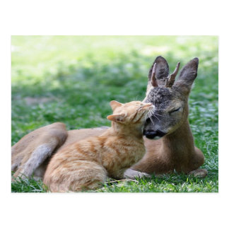 cat loves a deer postcard