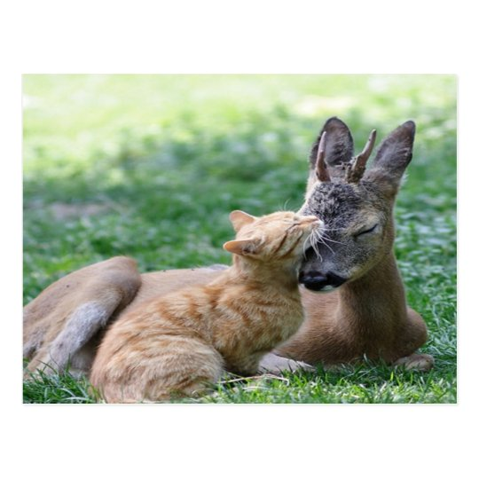 cat loves a deer postcard
