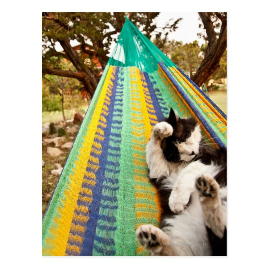 Cat lying in Mayan Mexican hammock Postcard