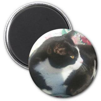 Cat Magmet Magnet