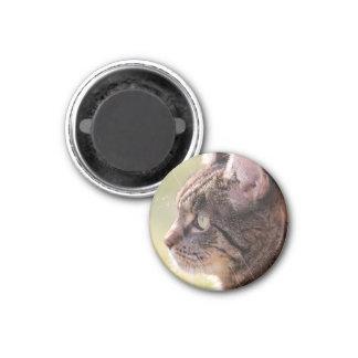 cat fridge magnet