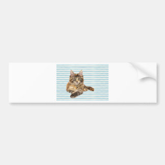 Cat, Maine Coon Bumper Sticker