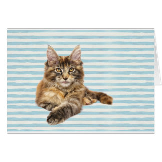 Cat, Maine Coon Card