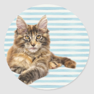 Cat, Maine Coon Classic Round Sticker