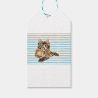 Cat, Maine Coon Gift Tags