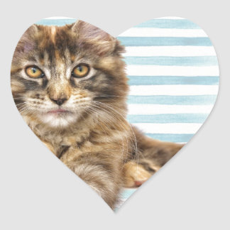 Cat, Maine Coon Heart Sticker