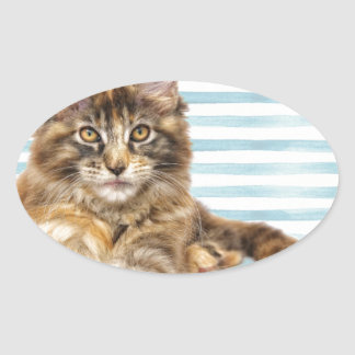 Cat, Maine Coon Oval Sticker
