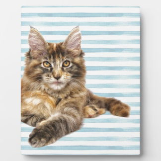 Cat, Maine Coon Plaque