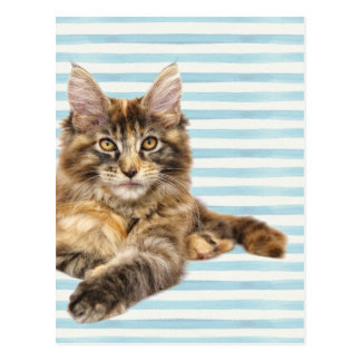 Cat, Maine Coon Postcard