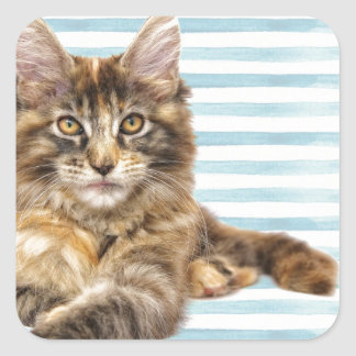 Cat, Maine Coon Square Sticker