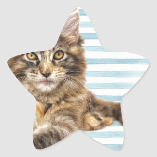 Cat, Maine Coon Star Sticker