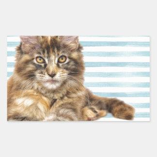 Cat, Maine Coon Sticker