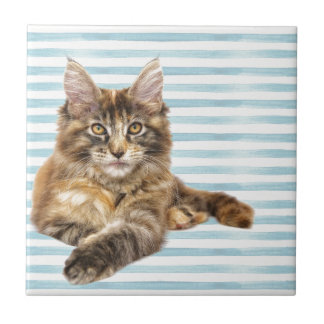 Cat, Maine Coon Tile